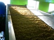 大豆を冷やしています