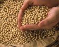 選りすぐりの国産大豆